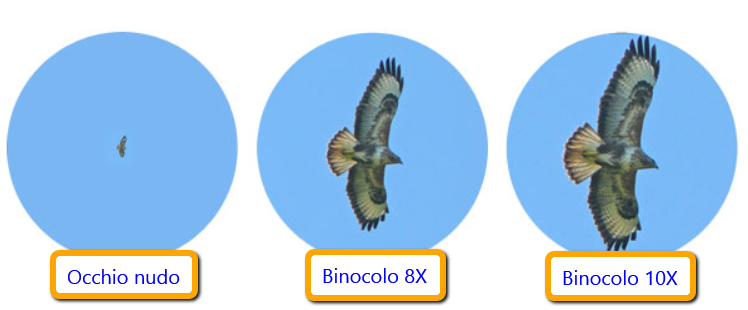Ingrandimento_binocoli_8X_10X